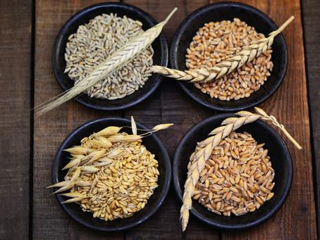 Les céréales, énergie pure