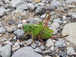 Les insectes sont nos amis!