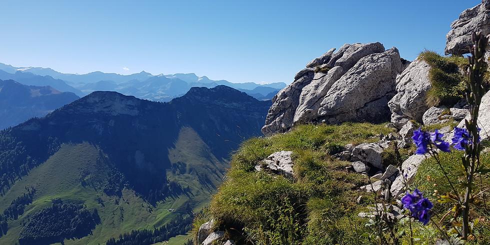 Teysachaux, montagne fleurie
