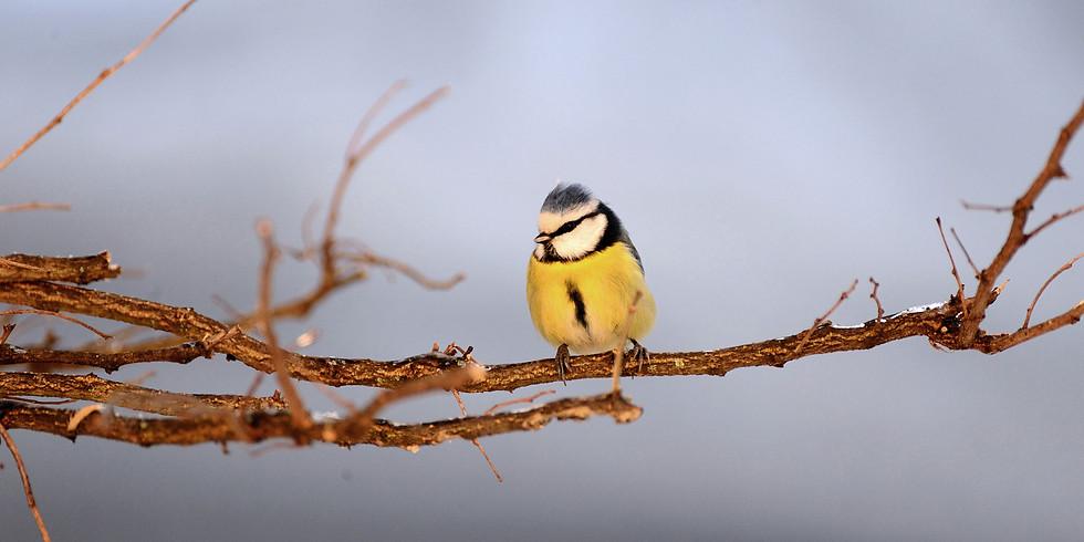 Et si j'observais les oiseaux