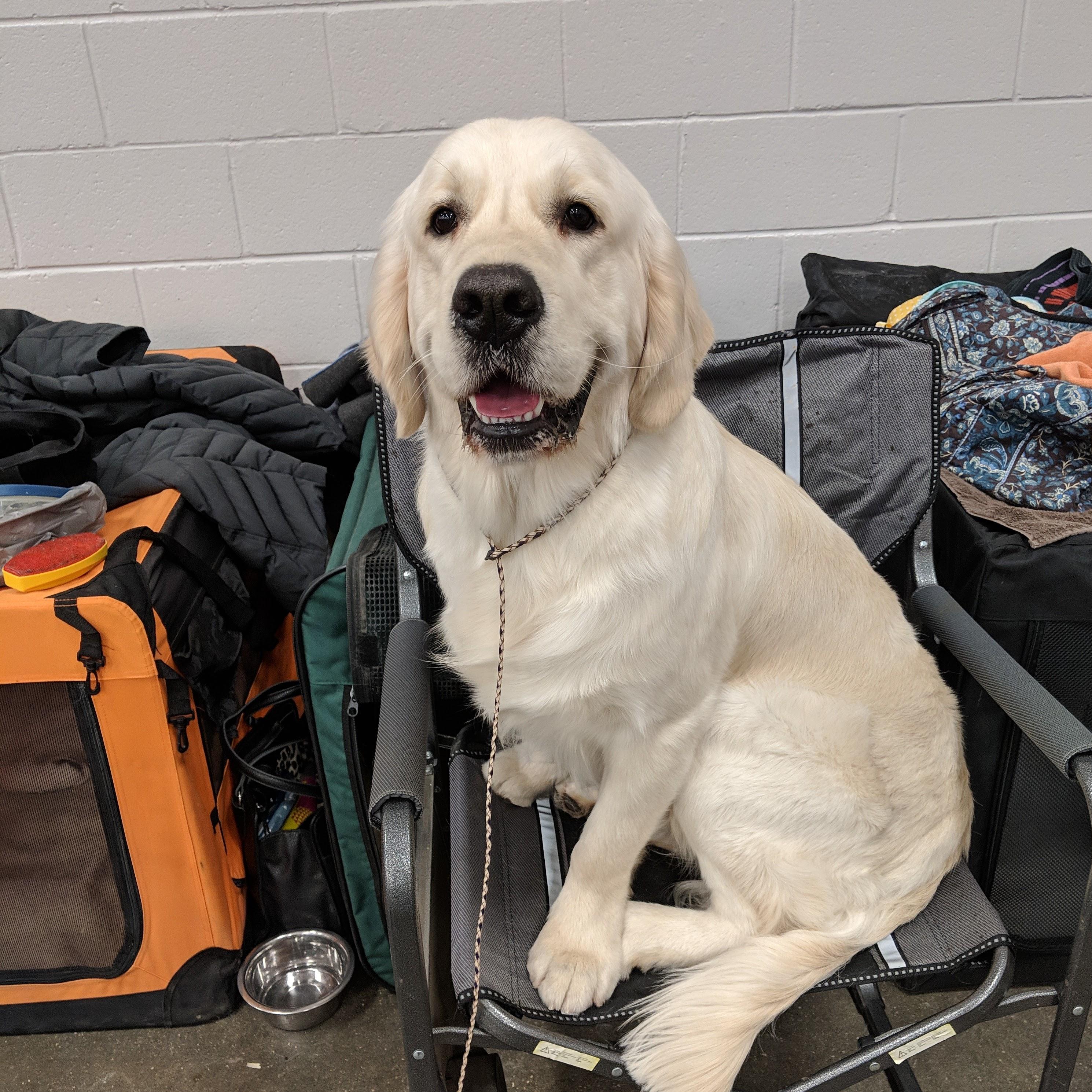 At a Dog Show