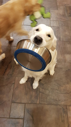 Nova the bowl collector