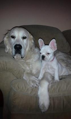 Cody and Frenchie