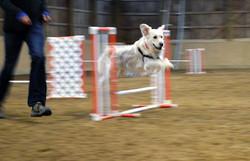 Mabel agility jump