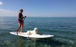 Mabel Surfing