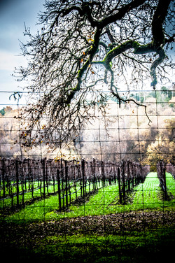 Vineyards at Palo Alto, CA