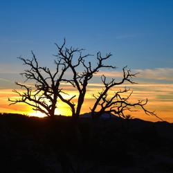 Sunset at Joshua Tree National Park