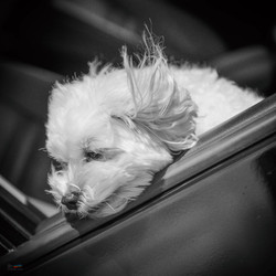 Enjoying the wind, California
