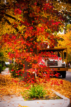 Fall in Palo Alto, CA