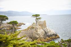 Lone Cypress, California