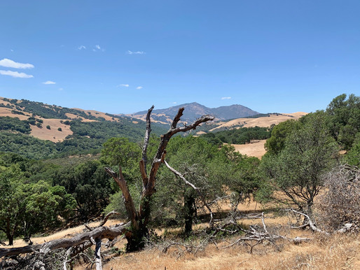 Morgan Territory Regional Preserve - Livermore, CA