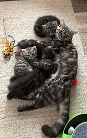 Anna und Kitten.jpg