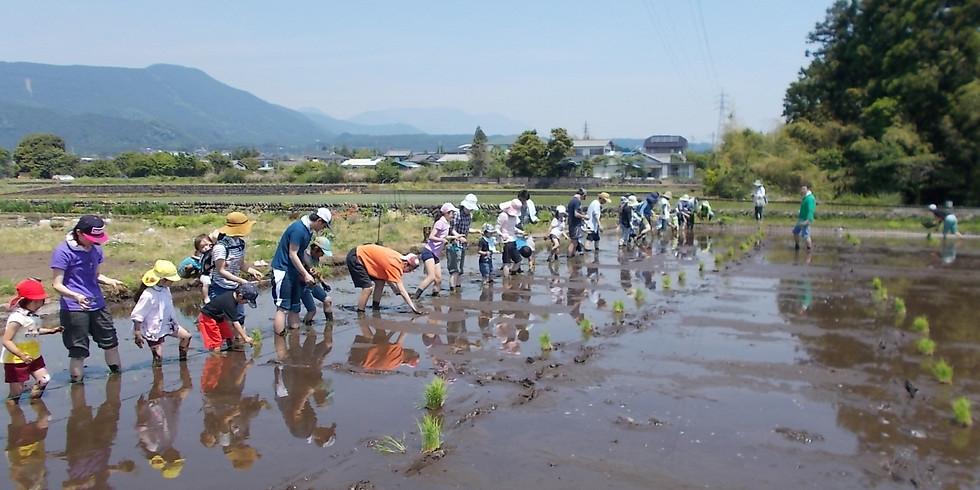 条一郎ファームで田植え体験会