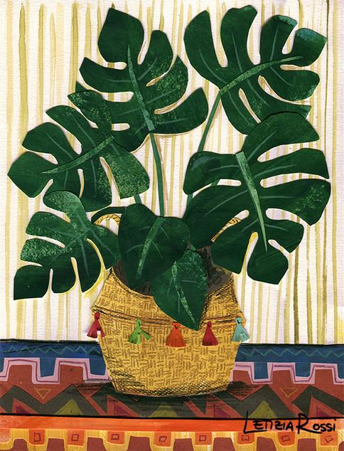 boho plant