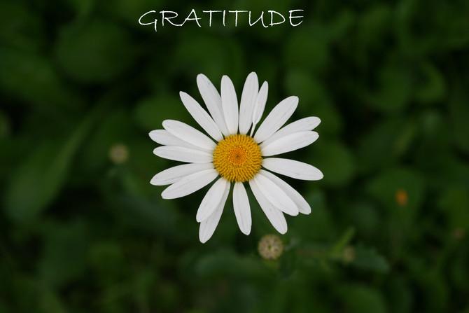 L'Art de la gratitude: un outil pour être en santé.