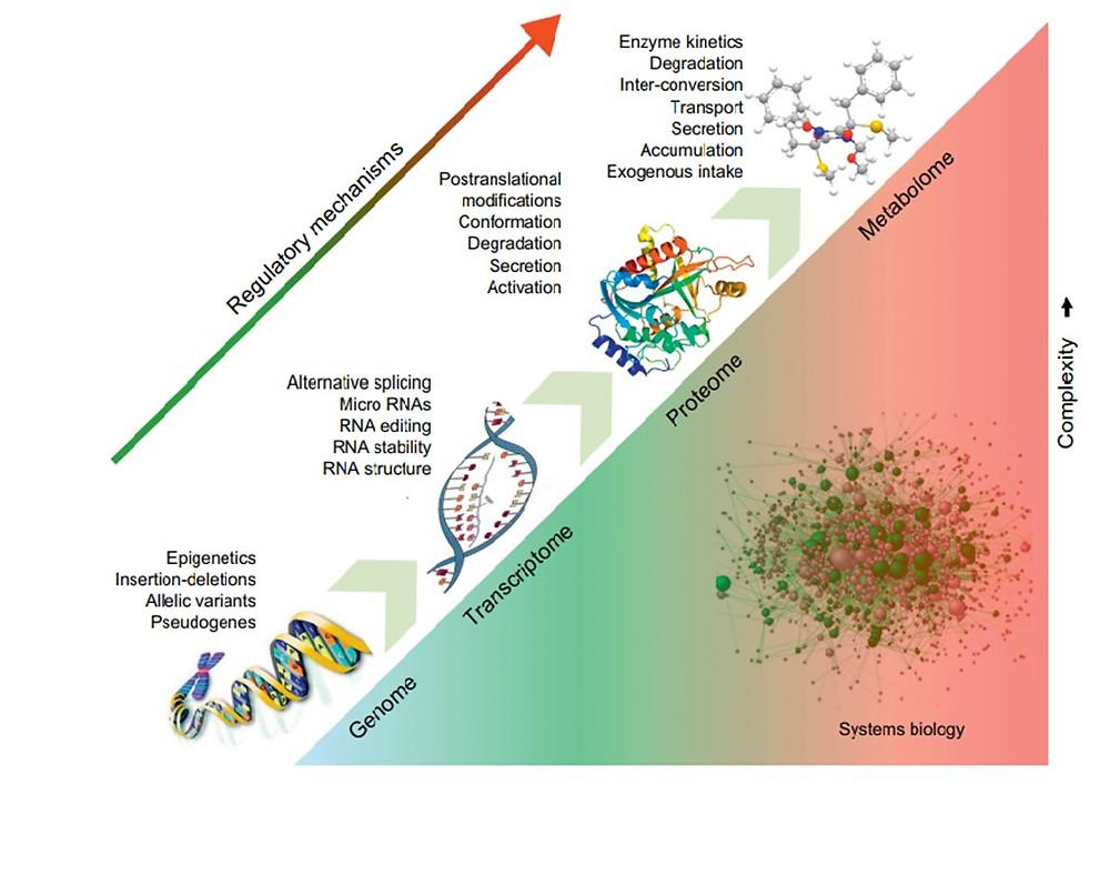 Resim 1: Genom çalışmalarından transkriptom, proteom ve metabolom çalışmalarını doğru gittikçe karmaşık artar ve bunlar bir araya gelerek sistem biyolojisini oluştururlar.