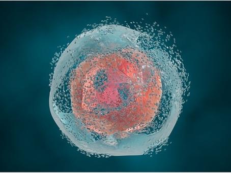 Hücre Ölüm Mekanizmaları