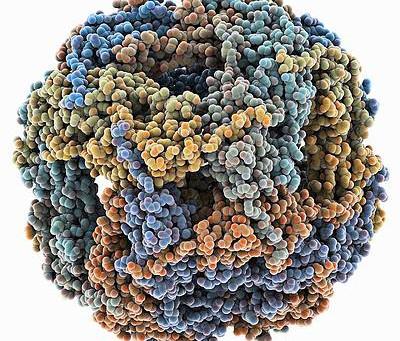 Stres Proteinleri ve Kanser
