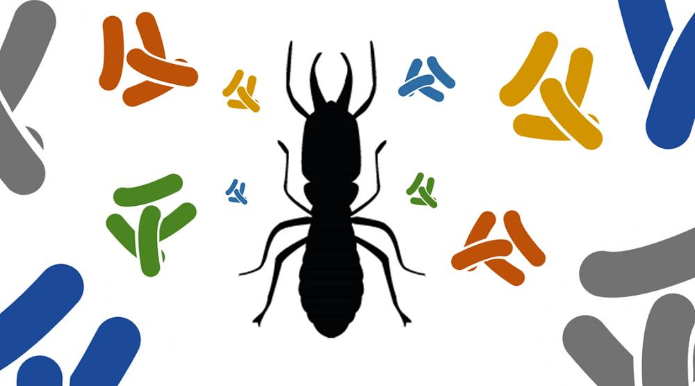 Şekil 1: Böcek ve bakteri simbiyotik ilişkisini temsil etmektedir. [2]