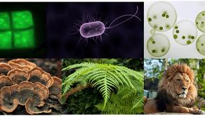 Canlıların Ortak Özellikleri