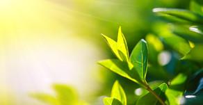 Bitkiler ve Işığa Bağlılıkları