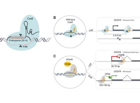 CRISPR/Cas9 Sisteminin LncRNA' ların Fonksiyonun Anlaşılmasında Kullanımı