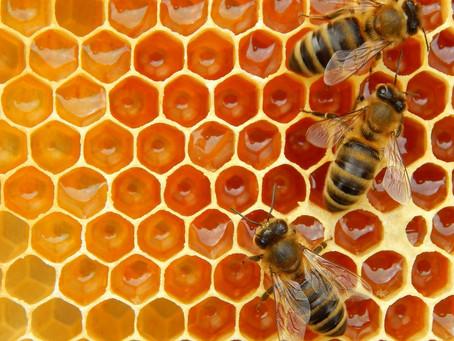 Arı Eczanesinin Tatlı İlacı: Bal