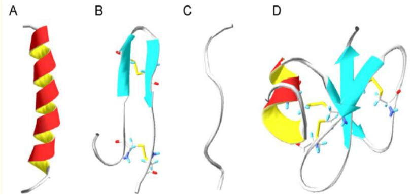 A) Amfipatik ɑ-sarmal yapıdan oluşan uzatılmış peptit zinciri, B) β yaprak yapısında düzenlenmiş peptit zinciri, C) Uzatılmış doğrusal peptit zinciri, D) Karışık peptit zinciri yapısı[5]