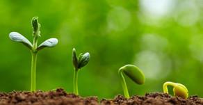 Ekspansin Ailesinin Bitki Gelişimi Üzerindeki Etkileri