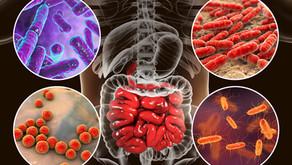 Hastalık, Sağlık ve Mikrobiyota