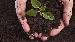 Toprak Mikroorganizmaları, Toprak Kirlenmesi ve Biyolojik Çevre
