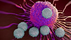 T Hücre Temelli Kanser İmmünoterapisi
