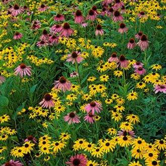 4 Oz. Wildflower Seed Mix
