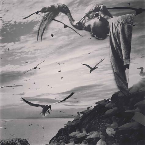 Anne-Julie Hynes, Birds, 2020