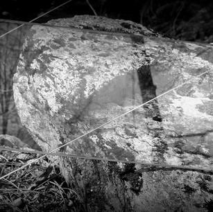 Anna Sylvia, Superposition nature / verre II, 2021