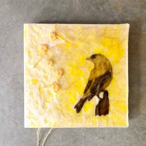 Sophie Lavigne, Drôles d'oiseaux, 2020