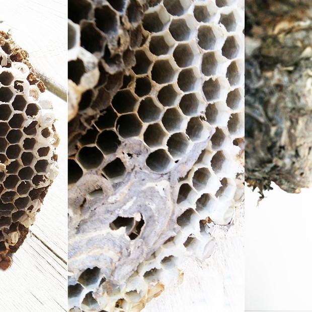 Shelagh McNally, Guêpe à la maison / Wasp Home, non daté