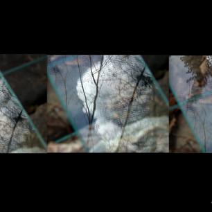 Anna Sylvia, Superposition nature / verre III, 2021