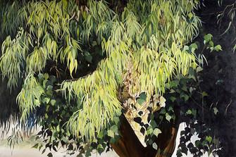 eucalyptus, series, 180x120 cm  oil on c