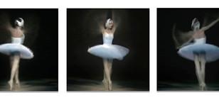 White swan triptych.jpg