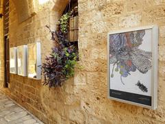 Street Gallery_Limor Margulis