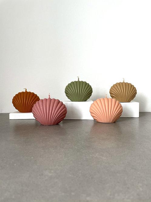 Shells - Colours