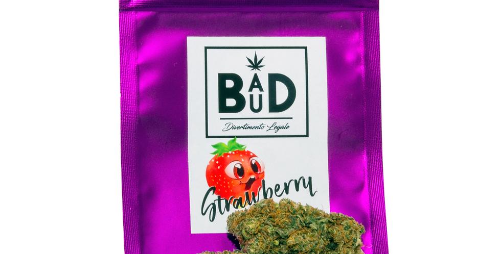 Strawberry - Infiorescenze di canapa CBD - Cannabis light