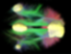 Default_Mode_Network_Connectivity_(cropp