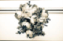 DSC_6764.jpg