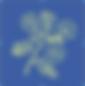 Blue Geranium Flower Logo 2020.png