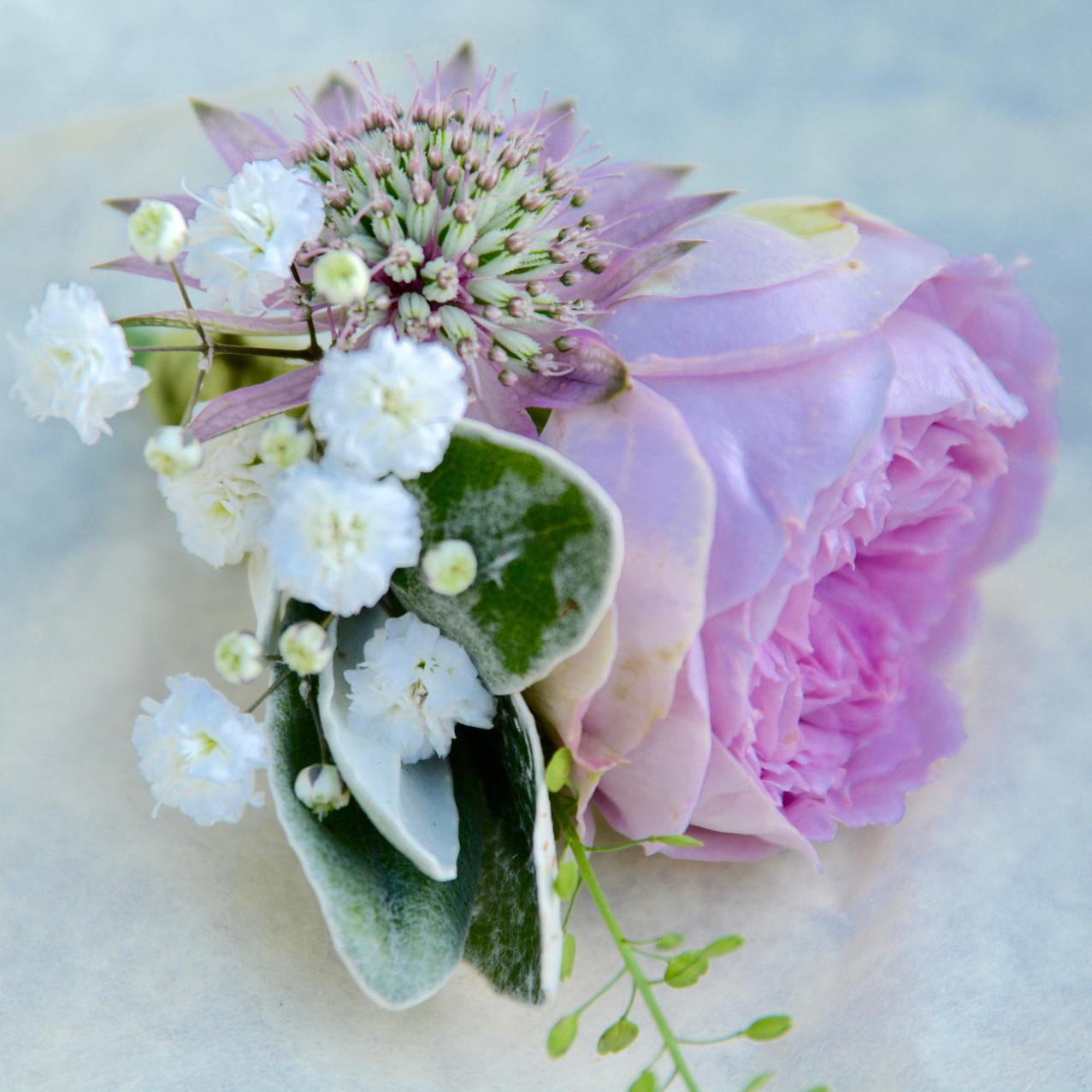 Spray rose buttonhole, dresssed with fluffy gypsophila, astrantia and thylaspi