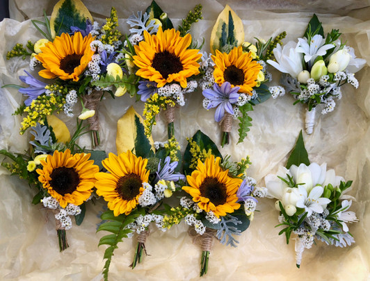 Tray of Sunflower Buttonholes