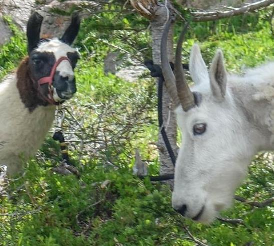 Llama + friend