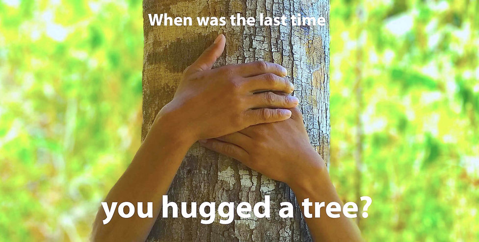 When was the last time you hugged a tree